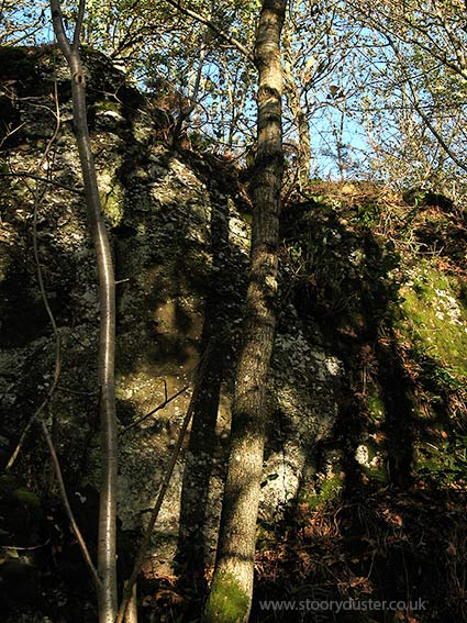 Sycamore tree shadows on cliff: Scotland.