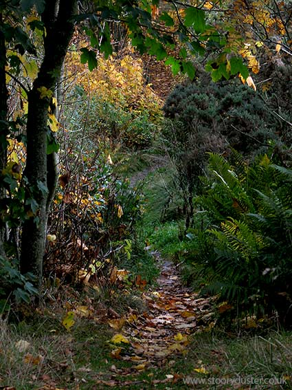 Autumn coloured leafy path: Scotland.
