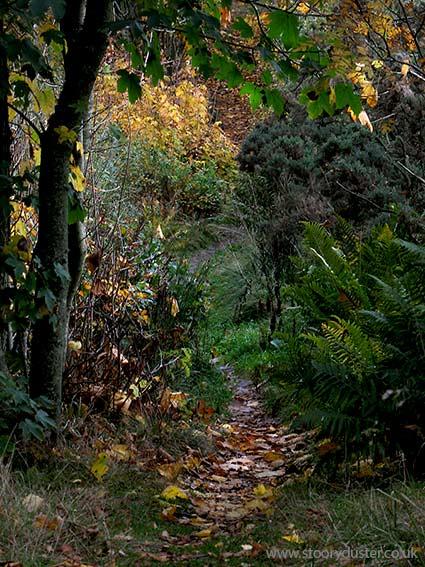 Autumn coloured leafy path: Scotland.