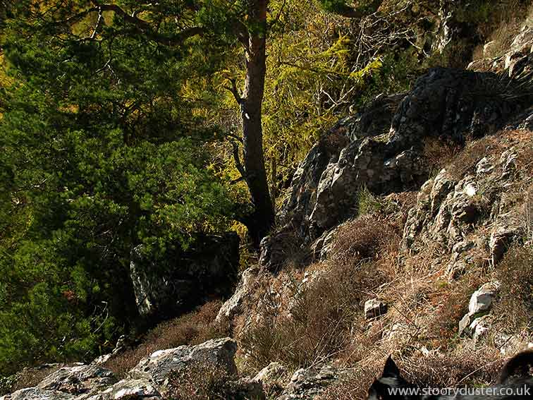 Rocks and Scots-pine trees: Scotland.