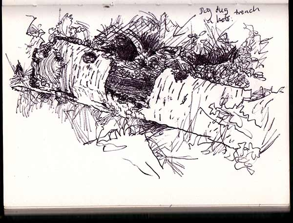Biro drawing of a rotting birch log.
