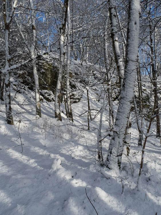 Shadows across the snow in birch woodland.