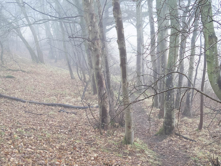 One of the woodland paths in January under low cloud.